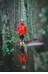Isbjörn Juniors Light Weight Rain Jacket Sun Poppy
